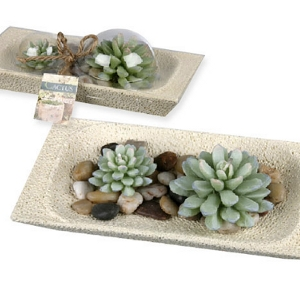 Kerze Kaktusset - Steinschalen