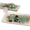 Teelichter und Kerzen - Kerze Kaktusset - Steinschalen